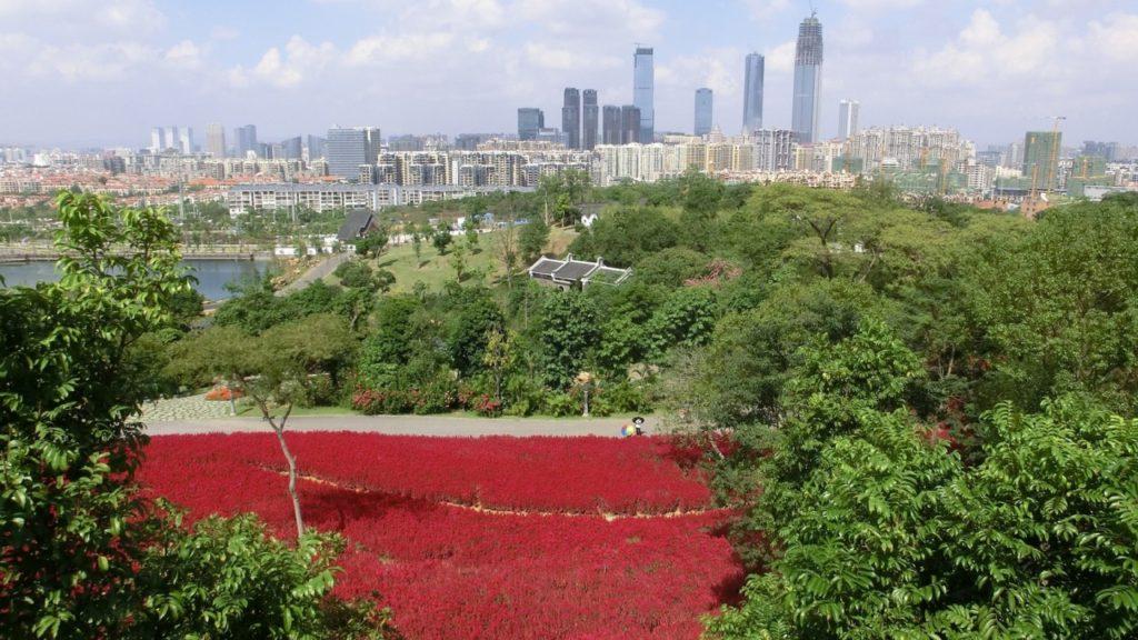 Nanning hinter rotem Blütenmeer