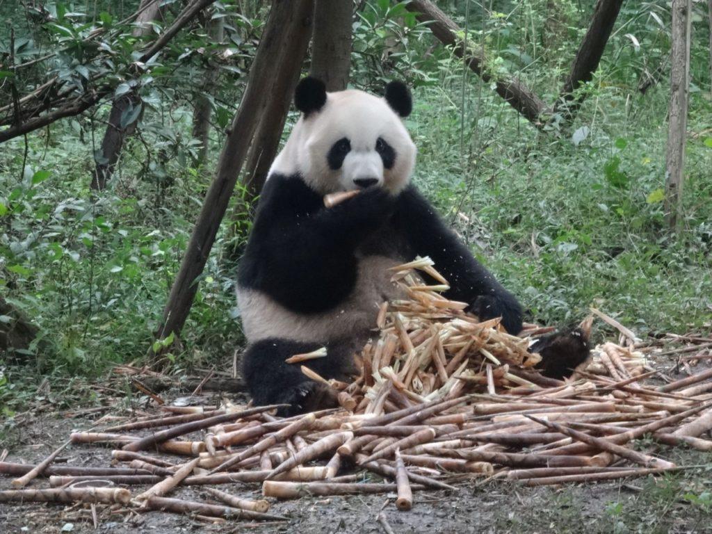 I love bamboo...