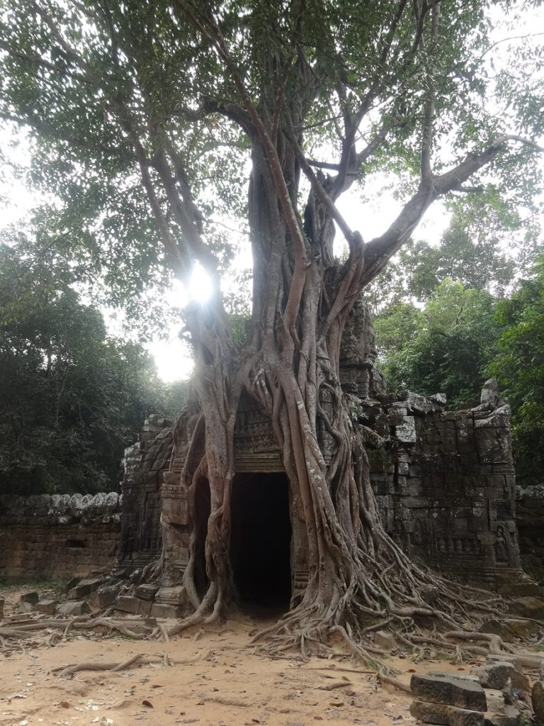 Aus gegebenem Anlass: Ta Som im Angkor Wat Archeological Park